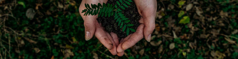 Wir pflanzen einen Baum mit euch